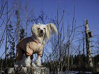 Cani piccoli con poco sottopelo possono gradire un cappottino