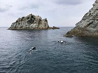 Immagine dell'edizione 0 di Elba Swim 647