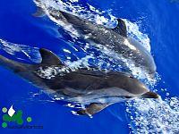 Delfini incontrati da IsolaMondo