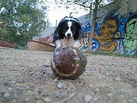 Predatori di palline