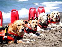 Ci sono cani che in spiaggia ci lavorano