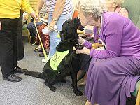 Alcuni corsi qualificano negli interventi assistiti con animali