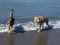 A volte c'è un mare da lupi