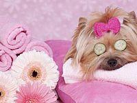 Dall'America al Giappone anche in Italia arrivano le Spa per cani
