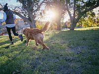 Col cane al parco si socializza, poi da cosa nasce cosa