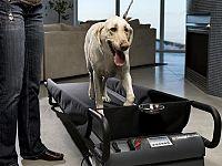 Il tapis roulant per cani, usato spesso per la riabilitazione