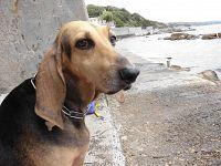 Certi cani non vantano spiccati livelli di acquaticità