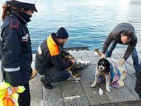Durante il salvataggio del cane