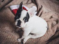 Spesso i cuccioli di razza sono vittime di tratte illegali
