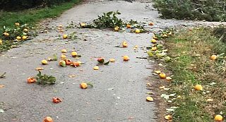 In foto i danni del vento