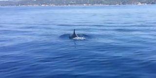 delfino all'Elba
