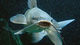 Ci sono molti pesci nel sito di incontri di mare