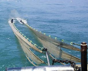 Siti di incontri gratuiti pescati in mare