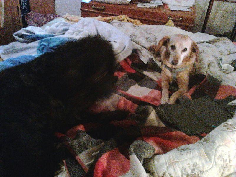 Birillo il cane innamorato ha trovato casa attualit - Portare il cane al canile ...