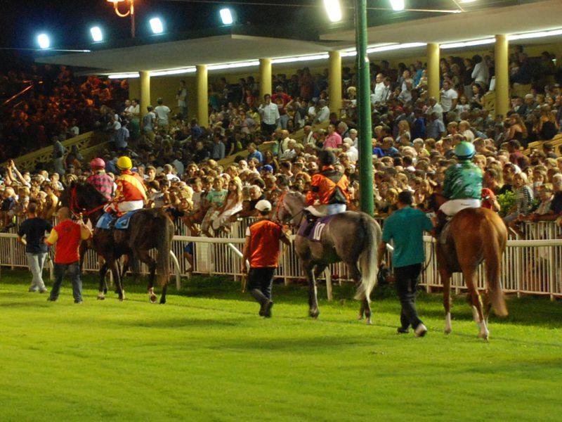 Cavallo vince la corsa e muore dopo il traguardo altri - Avere un cavallo ...