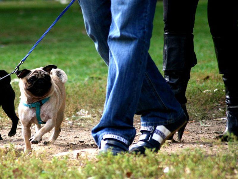 Escrementi Dei Cani In Strada Fioccano Le Multe Cronaca
